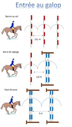 Les distances - Art Of Equitation Horse Exercises, Horse Riding Tips, Riding Lessons, Hobby Horse, Horse Quotes, Horse Training, Show Jumping, Horse Care, Horseback Riding