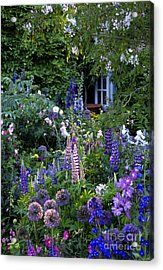 Beautiful border including: Anchusa azurea 'Loddon Royalist', Delphinium 'Clifford Sky', Lupine russell 'The Governor', Cistus pulverulentus! My dream garden! Dutch Gardens, English Country Gardens, Farm Gardens, French Country, The Secret Garden, Garden Cottage, Cottage Front Yard, Small Cottage Garden Ideas, Backyard Cottage
