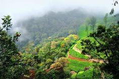 Munnar (Best Honeymoon Destinations In India)   BestHoneymoonDestinationss.blogspot.com