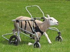Buster voltou a andar com a cadeira de rodas adaptada - Picture: Hotspot Media