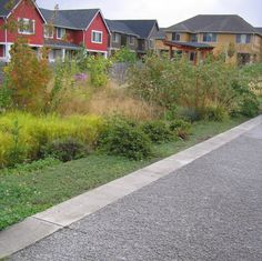 In addition to serving as a model for urban neighborhood development, HIgh Point's cohesive natural drainage system helps improve water quality in the nearby Longfellow Creek by reverting the site, 10% of the Longfellow Creek basin, to pasture conditions.
