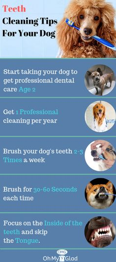 Dental care is important for your pets. And, you can certainly clean your pet's teeth at home after knowing how to brush dog's teeth.