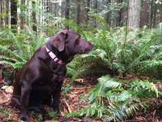 For days, Kate & Adam will go coast-to-coast from Prince Edward Island to Tofino. Day of their journey saw them travel to Surrey & Vancouver. Prince Edward Island, Surrey, Ferns, Vancouver, Labrador Retriever, Coast, Canada, Adventure, Park