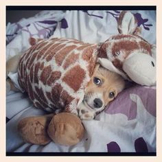 Help! I've been eaten by a pillow pet...