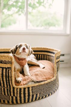 Dog beds can be simple or fancy, expensive or homemade, and everything in between. How do you pick the right dog bed for your pup when there are so many on the market? Does your pooch even need a dog bed? Collie, Puppy Beds, Pet Beds, Cute Dog Beds, Diy Dog Bed, Animal Gato, Cockerspaniel, Dog Furniture, Cat Dog
