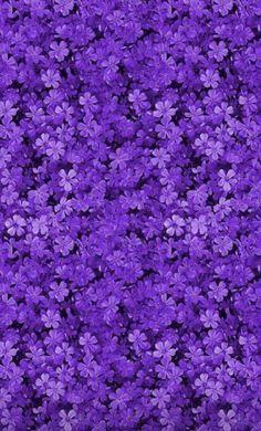 Violet Aesthetic, Dark Purple Aesthetic, Lavender Aesthetic, Aesthetic Colors, Flower Aesthetic, Aesthetic Clothes, Aesthetic Women, Aesthetic Pictures, Purple Wallpaper Phone