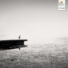 Photographer Frang Dushaj - Oneiric Autumn - NATURE - Landscapes - Finalist - ONE EYELAND PHOTOGRAPHY AWARDS 2014