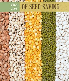 The Art of Seed Saving