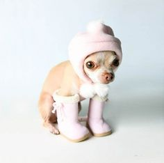 Ready for winter