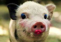 Foreign ownership can put lipstick on a pig but it's still a pig ...