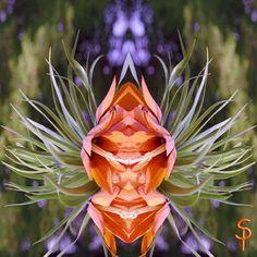 "Tauch ein in die Anderswelt ""Kaiserkronengeist "" kreativesbypetra Petra, Rose, Flowers, Plants, Pink, Plant, Roses, Royal Icing Flowers, Flower"