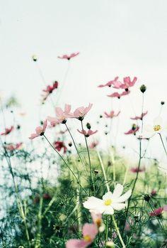 LoveQuotesRus : Photo