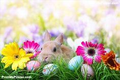 sweet easter rabbit poster #poster, #printmeposter, #mousepad, #tshirt