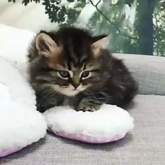 Cute Baby Cats, Funny Cute Cats, Cute Kitten Gif, Cute Cats And Kittens, Cute Funny Animals, Cute Baby Animals, Kittens Cutest, Cute Animal Names, Cute Animal Videos