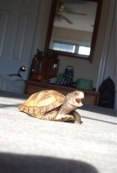 I don't know if they're welcome here, but I caught my turtle happy chirping and just think he's too adorable! - Imgur