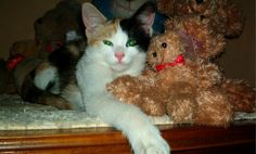 Cat Hides in Stuffed Animal Pile–Caption This Cute Photo!