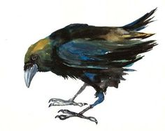 of all bird species, Corvus corax, the raven is considered the most ingenious