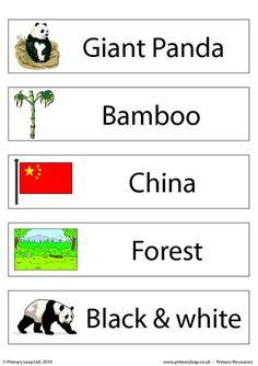 Set of 5 flashcards - Giant panda