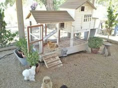 Need to do this with my Silkie coop