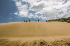 Surfing on sand dunes in NZ #terasu