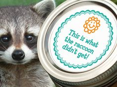 Raccoon canning jar label funny round stickers by CanningCrafts, $4.00
