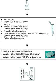 Procesamiento de hemocultivos positivos para identificación en MALDI-TOF.  http://www.elsevier.es/es-revista-enfermedades-infecciosas-microbiologa-clnica-28-articulo-identificacion-bacteriana-directamente-del-hemocultivo-90193766?referer=buscador