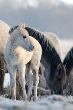 Fuzzy baby horse with family.