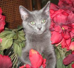 My cat Taylor. Lora, Carlsbad, California. 7/29/12