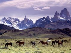 This is where I WANNNNT to go.CABALLADAS Patagonia, Argentina.Ladybird@50.☆☆☆☆☆