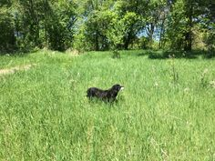 The pooch out in the field. Bear, the dog.  http://twitter.com/rtc5comm