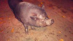 Muy contentita ella @la chata pig