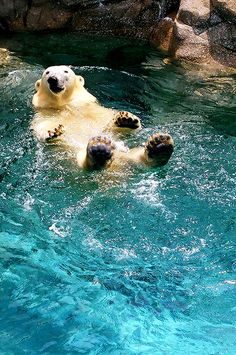 earth-song: Polar Bear by ~augustinesoong