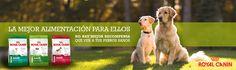 #perro #dog #mascotas #animales #camisetas www.theanimallshop.com