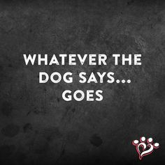 Especially if the dog is a Yorkie!