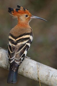 e66942dab54b The 21 best Join Bird Watching Safaris images on Pinterest