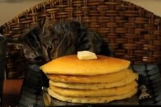 Check out all the awesome pancake gifs on WiffleGif. Including all the pancakes gifs, breakfast gifs, and funny gifs. Sneaky Animals, Funny Animals, Cute Animals, Happy Animals, Funny Cat Videos, Funny Cats, Humorous Cats, Crazy Cat Lady, Crazy Cats