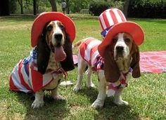 In honor of the 4th of July, here are some pets who aren't ashamed to show everyone just how much they love #America!