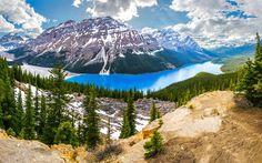 Peyto Lake, forest, mountains, Banff National Park, summer, Alberta, Canada