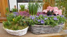 Jarní truhlíky Plants, Flora, Plant
