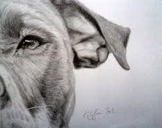 pencil drawings of pitbull's - Google Search