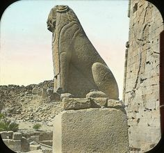 Egypt - Temple of Isis, Sphinx in front of South Pylon. Taken around 1900.