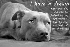 I will always advocate for Pit Bulls. They shouldn't be judged on their reputation. The people who gave them the reputation, should be judged.