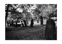 Life in Newtown Cemetery, 2011