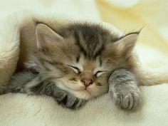 спящий котенок фото: 19 тыс изображений найдено в Яндекс.Картинках