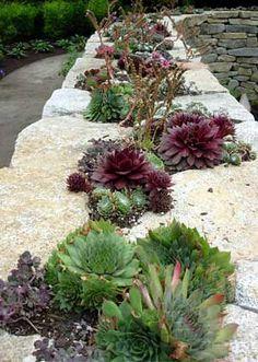 Sedum planting along top of granite wall