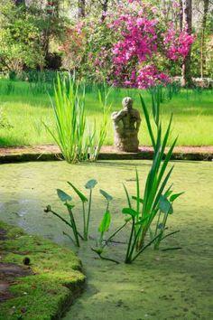 pond, Magnolia Gardens, Charleston, South Carolina | Deb Snelson Photography