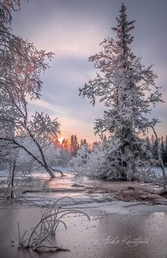 🇫🇮 Talvi (Suomi) // Winter (Finland) by Asko Kuittinen ❄️🌅 Winter Pictures, Nature Pictures, Cool Pictures, Winter Photography, Landscape Photography, Raindrops And Roses, Winter Love, Winter Magic, Winter Scenery
