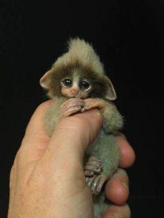 Adorable Mono Bebé