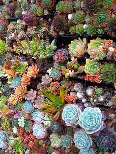 succulents growing on a wall | Flickr - Photo Sharing!