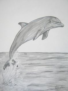 Lovely Drawing Of Dolphins In Pencil Easy Animal Drawings, Pencil Drawings Of Animals, Realistic Pencil Drawings, Pencil Sketch Drawing, Art Drawings Sketches, Easy Drawings, Drawing Ideas, Dolphin Drawing, Ocean Drawing